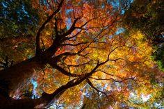 美しい秋 森 自然 高解像度で壁紙