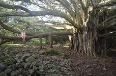 5 Lieblingsplätze an der Road to Hana: Diese Zusammenstellung erleichtert dir die Planung deines Besuchs der Road to Hana auf Maui, Hawaii.
