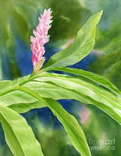 Pink Ginger With Blue Green Background Painting by Sharon Freeman