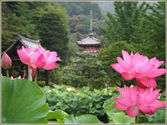 季節の花|観光ガイド|そうだ 京都、行こう。~京都への旅行、観光スポットで京都遊び~