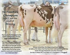 The Heart of a Champion Written from the heart of one who shows Dairy Cattle