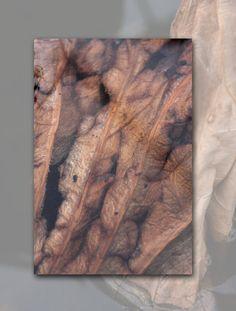 http://in-errances.blog.lemonde.fr/files/2011/02/nelombo-11.1298506877.jpg