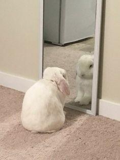 Cute Baby Bunnies, Funny Bunnies, Cute Babies, Bunny Bunny, Funny Pets, Cute Little Animals, Cute Funny Animals, Cute Cats, Cute Bunny Pictures