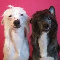 What Your Dog's Breed Says About You : http://theawesomedaily.com/what-your-dogs-breed-says-about-you/ #dogs