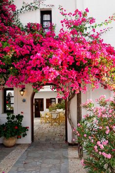 Photo about Blooming hot pink bougainvillea decorating a white entrance or archway to a stone patio. Image of ornamental, blooms, flowers - 22602696