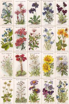 cigarettes card-Alpen Flowers
