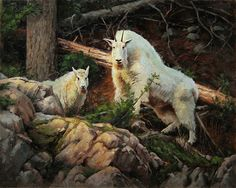 High Mountain Matriarch by Mark McKenna Oil ~ 24 x 30