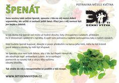 KVĚTEN - Špenát - 30ti denní výzva Dieta Detox, Korn, Natural Health, Nature, Plants, Recipes, Relax, Catalog, Naturaleza