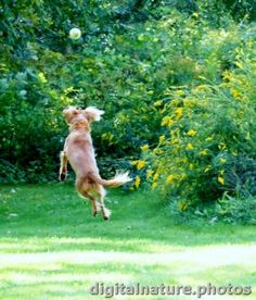 dog a leapin