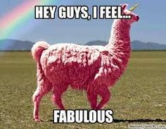 Image result for funny llama memes
