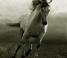 Inspiring picture animal, black and white, horse, nature, photography, precioso. Resolution: 400x499 px. Find the picture to your taste!