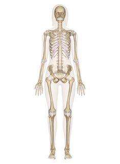 37 Best Skeletal System images   Preschool, School, Activities