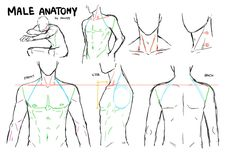 male drawing anatomy - Google Search