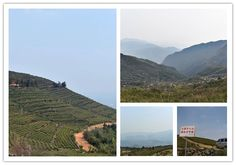 The second day, we drive to another Organic Dragon Well Long jing Tea Garden. We drive 5 hours from Lin'an to the top of the CangShan  mountain. Because of the high altitude, the temperature here is very low, and only some small tender tea buds. We took many photos in the tea garden, guess the altitude of the place we took these photos. The closest answer will get a Free Spring Tea Assortment. Hint: it is more than 500 meters. And here I'm honored to announce the winner yesterday is George.
