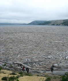Spirit Lake ~ Mount St Helens ~ Washington ~ The lake is full of trees/logs from the May 18, 1980 eruption of the volcano.