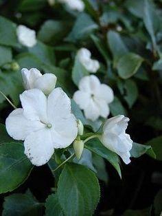 6 plantas que no sabías que florecen todo el año