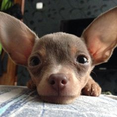 Look at them ears