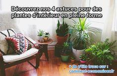 Il existe 4 aliments qui peuvent entretenir les plantes d'intérieur naturellement. Et pour presque pas un sou ! Découvrez l'astuce ici : http://www.comment-economiser.fr/plantes-vertes-biere.html?utm_content=buffer396f0&utm_medium=social&utm_source=pinterest.com&utm_campaign=buffer