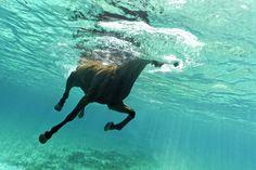Sea horse by Kurt Arrigo