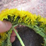 Brilliant!! Making a dandelion crown and other dandelion magic. Also use the braiding method.