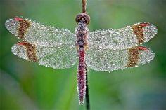 libelula hermosos colores insecto que me gusta