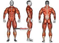 A hipertrofia muscular é um processo não apenas de ordem estética, mas também adaptativo. Veja neste artigo um guia completo para alcançar a hipertrofia muscular! Muito se fala de hipertrofia muscular, mas muitas vezes de forma errônea e sem levar em conta os diferentes aspectos envolvidos neste processo. Muito mais do que apenas representar um …