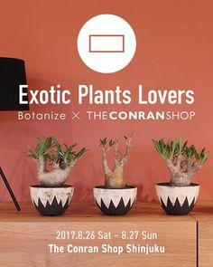Exotic Plants Lovers Botanize x The Conran Shop 新宿本店にて個性豊かな塊根植物コーデックスや多肉植物などのエキゾチックプランツで知られるBotanizeボタナイズのポップアップを開催しますBotanizeの特徴的な鉢と塊根植物がもつ独特な形状と質感ザコンランショップならではのエクレクティックなスタイリングがコラボレートした2日間だけの特別なイベントです期間中は大人気のInvisible InkNEOSHIHOの鉢をはじめotanizeならではの秀逸な植物が揃いますまたanea design代表横町健氏も直接店頭にてご案内してくださいますぜひこの機会にエキゾチックな植物に触れてみてください 開催日時8月26日土27日日 開催店舗ザコンランショップ 新宿本店 ----------------------------------------------------  invisible inkneoshihoのアーティスト作品に関して鉢単品と鉢植物のどちらも1アーティストにつきお一人さま1点までの購入最大個までとさせていただきます…