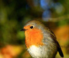 The best bird I know