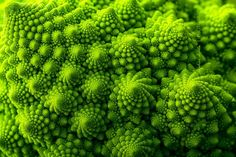 Perfect-Geometric-Patterns-In-Nature4__880