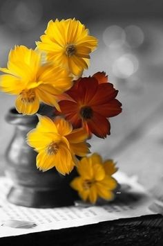 Black White Photos, Black And White, Splash Photography, Color Splash, Orange, Yellow, Plants, Kiss, Coral