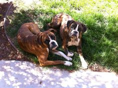 Boxers Of Palo Mesa Girls.. Emma & Zoey!