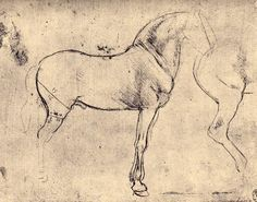 Rough sketch of a horse, by Leonardo da Vinci