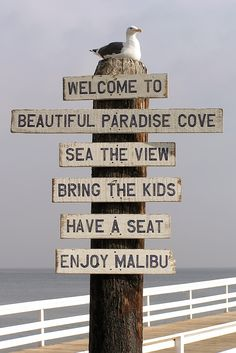 Seagull on Malibu Sign at Pier, California..... Don't mind if I do