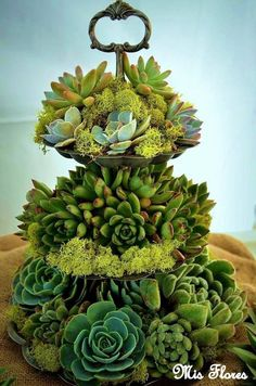 Beautiful succulent arrangement