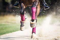 9 Übungen für einen besseren Galopp   Pferderevue   Ausbildung