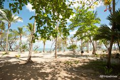 ClubHotel Riu Bachata (Puerto Plata, Dominican Republic) - UPDATED 2016 All-inclusive Resort Reviews - TripAdvisor All Inclusive Resorts, Dominican Republic, Resort Spa, Trip Advisor, Travel Destinations, Around The Worlds, Holidays, Board, Plants
