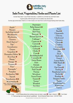 printable list of safe foods for guinea pigs