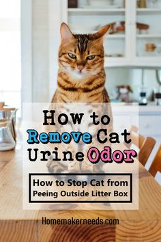 Cat Urine Odor Natural Removal Tips Cleaning Cat Urine, Remove Cat Urine Smell, Cat Pee Smell, Cat Urine Smells, Cleaning Hacks, Cat Urine Remover, Urine Odor, Stop Cats From Peeing, Male Cat Spraying