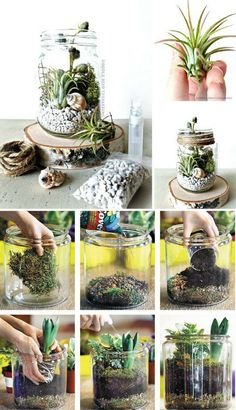 DIY Mason Jar Terrarium Step-by-Step Tutorial (Bottle Green Mason Jars) Mason Jar Plants, Mason Jar Garden, Mason Jar Terrarium, Plants In Jars, Garden Terrarium, Mason Jar Diy, Mason Jar Succulents, Succulent Terrarium Diy, How To Make Terrariums