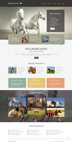 Template 49010 - Horse Club Responsive WordPress Theme
