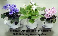 tiny pots for miniature african violets | African Violet Fantasy Hybrid Teacup – Park Seed African Violet ...