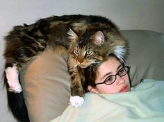 One of the founding members of the Fog City Cat Club - here is Richelle Modolo with one of her Maine Coons on her head.  :)  Sweet!