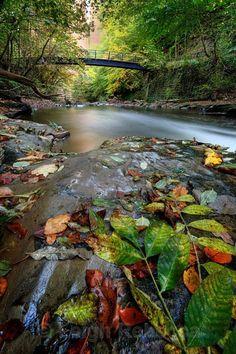 Autumn Beck - Landscapes