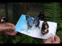 POP-UP CARD tutorial website. PopThatCard.com   Creation of Australian Cartoonist Ricko.  Real Butterflies Like This Butterfly Pop-Up-Card
