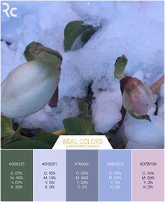 #RealColors #winterrose #wintertones