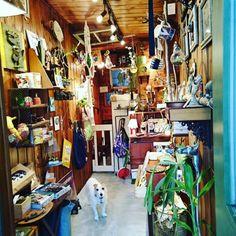 白い犬と一緒に小さな雑貨屋  福岡市中央区今泉
