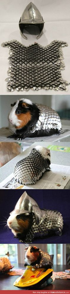 Prepare your guinea pig for battle<<< Roberto will win his battle against the evil forces of Browny