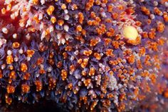 look at these amazing corals...