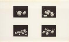 four photographs of grapes, new york, feb, 1966, irving penn