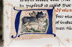 Five kinds of grumpy hounds Douce 335 f. Middle Ages, Mythology, Medieval, Dogs, Pet Dogs, Mid Century, Doggies, Medieval Times